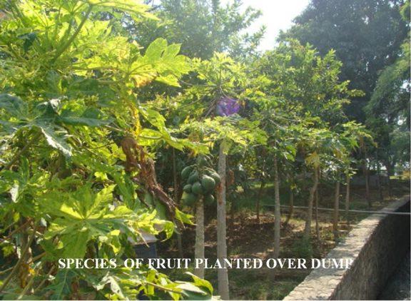 Garden Images4