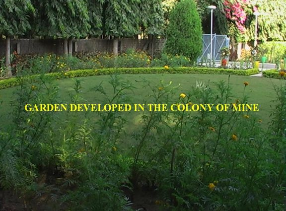 Garden Images3
