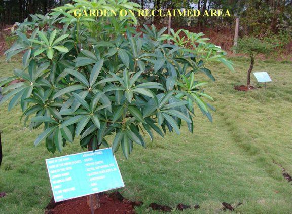 Garden Images5